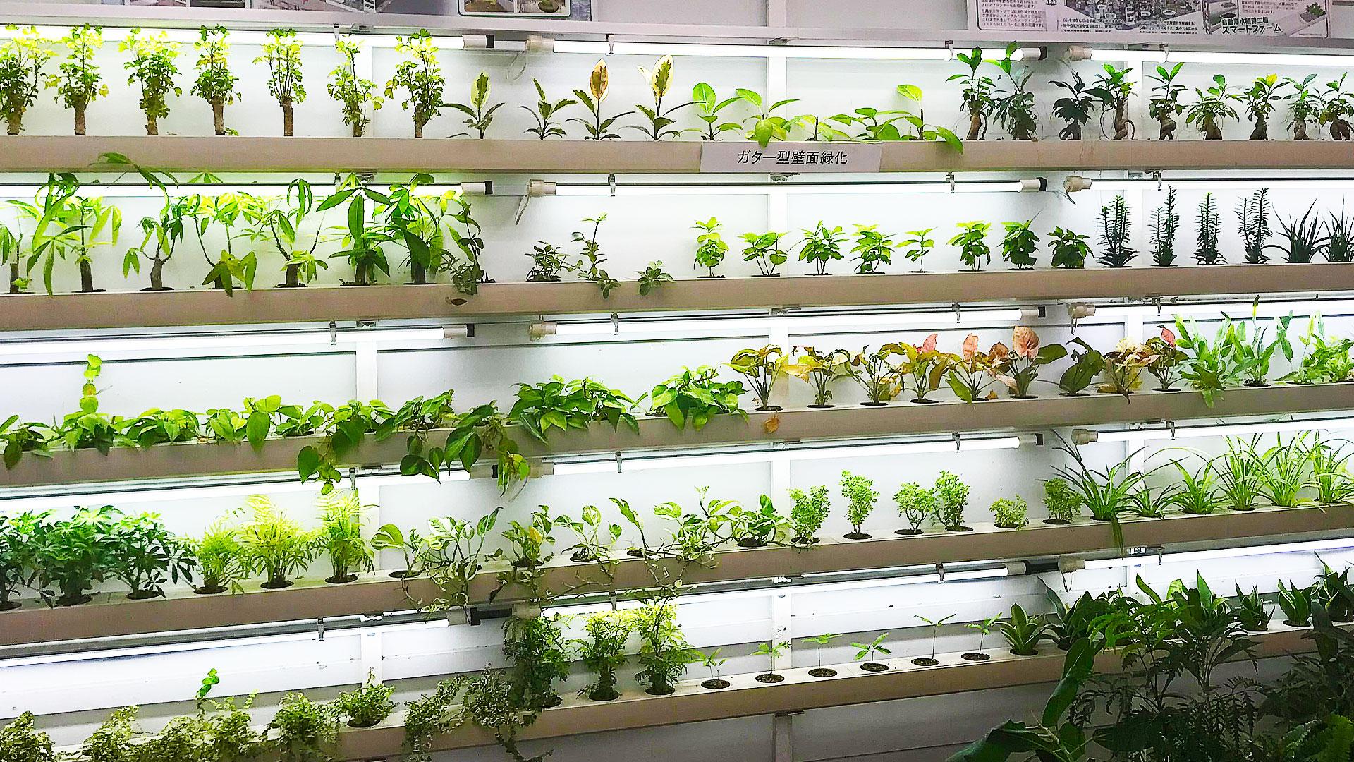 ハイドロカルチャーの観葉植物は蛍光灯の光でも育つ