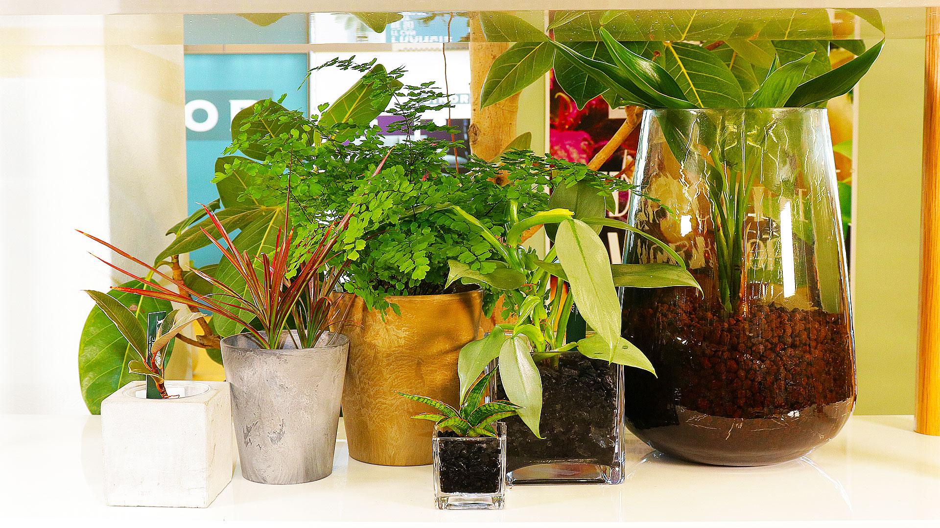 ハイドロカルチャーの観葉植物は、いろいろな器が使える。ガラスやコンクリートや花瓶などもプランターポットとして使える