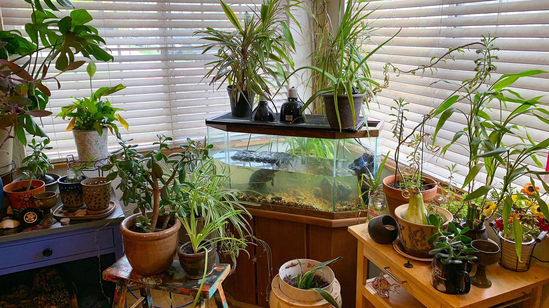アメリカの一般家庭の観葉植物