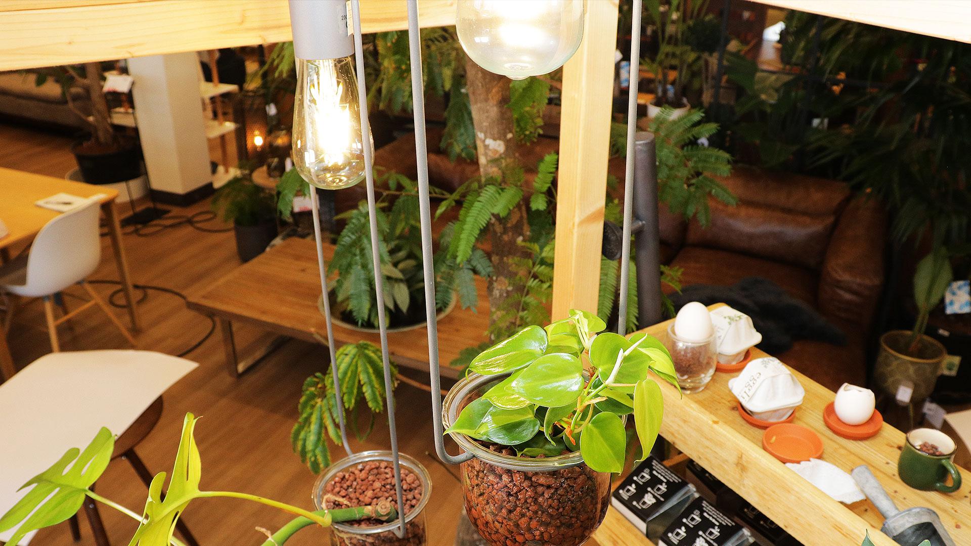 照明と植物を一緒に吊り下げれる鉢。プランターポットの画像