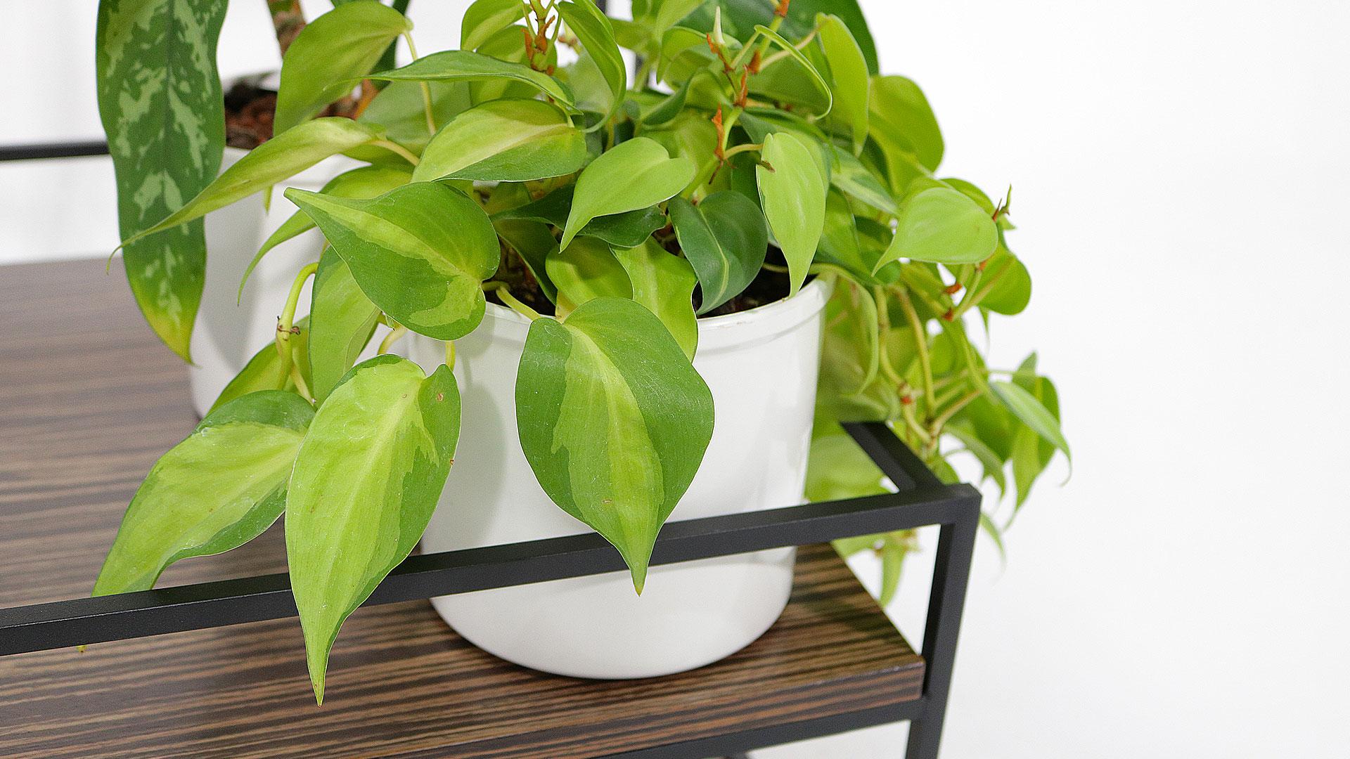 サイドテーブルと観葉植物ポトスの下棚のアップ画像