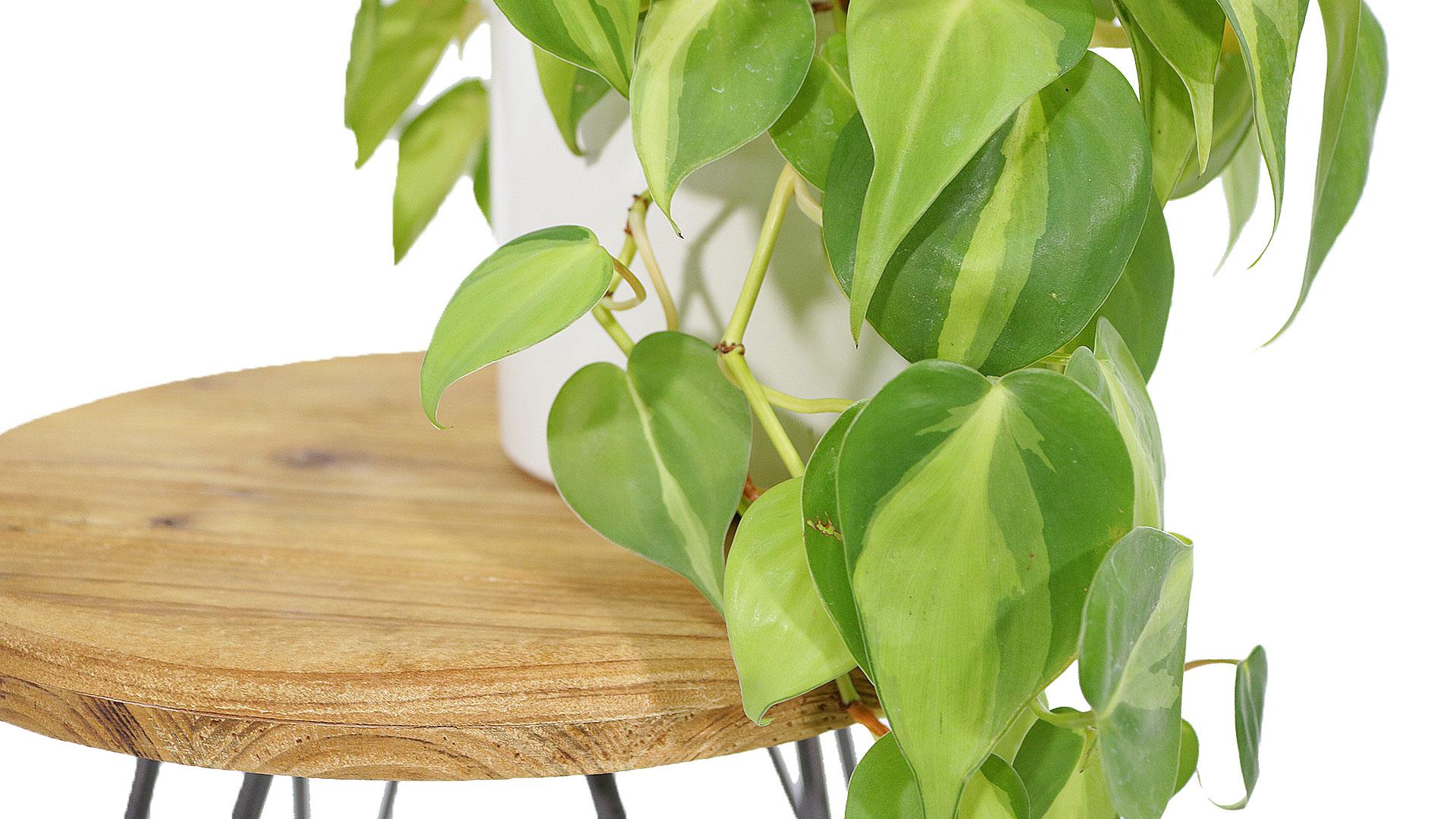 椅子に観葉植物を飾る