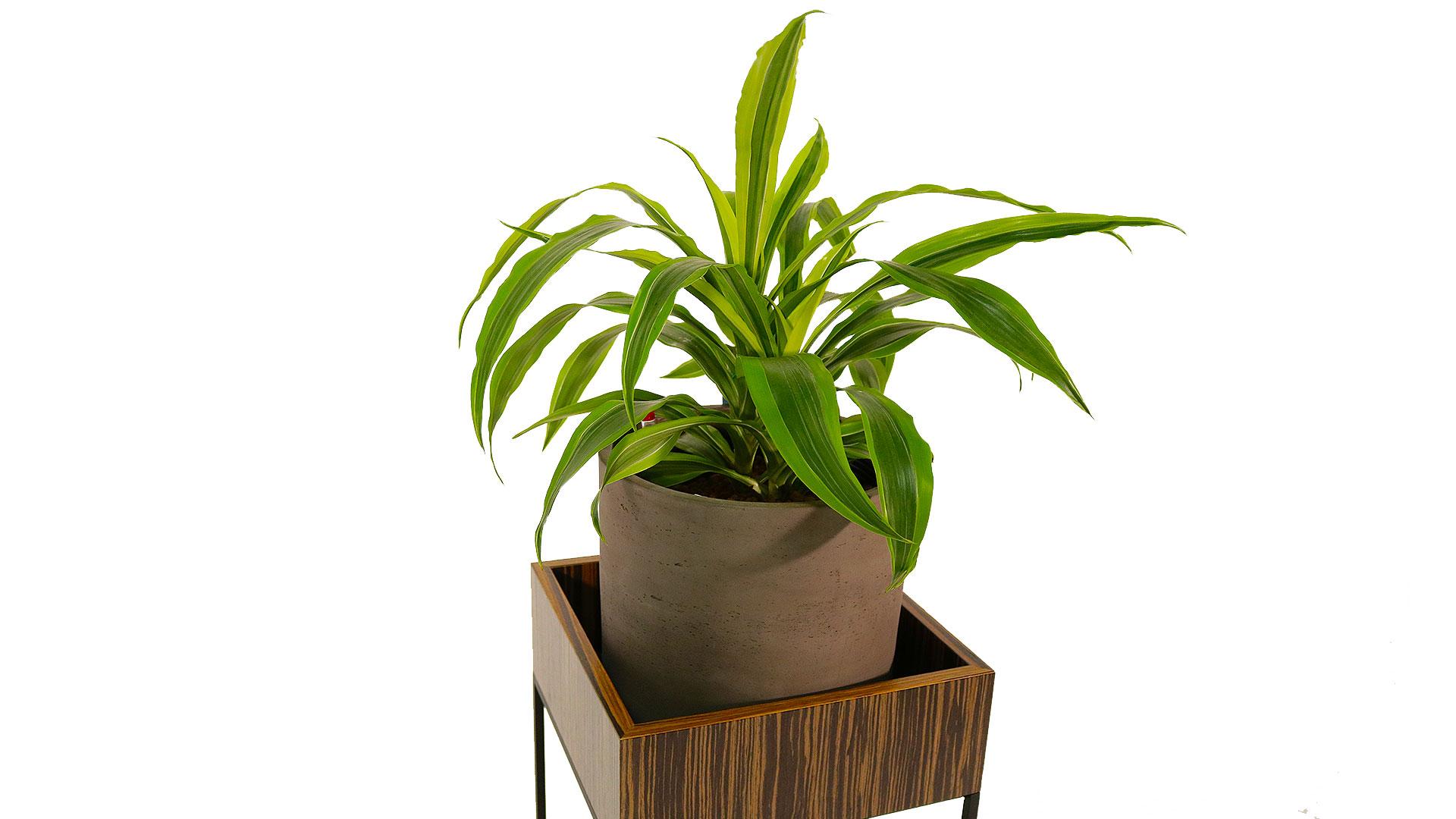 プランターポットと観葉植物のサイズ