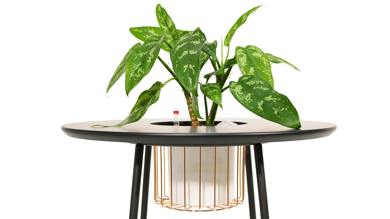 観葉植物とサイドテーブルの写真