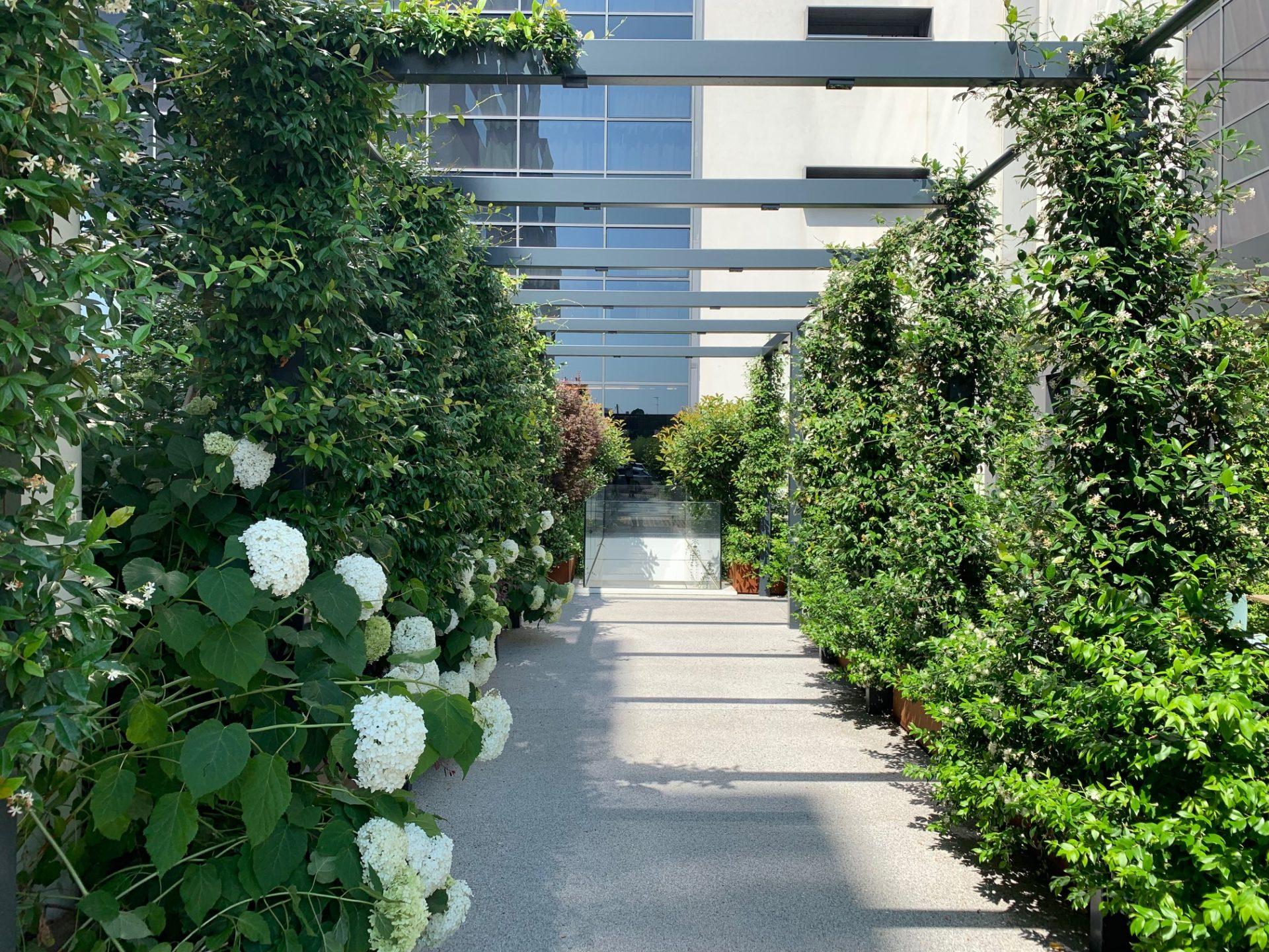 植物に囲まれた通路