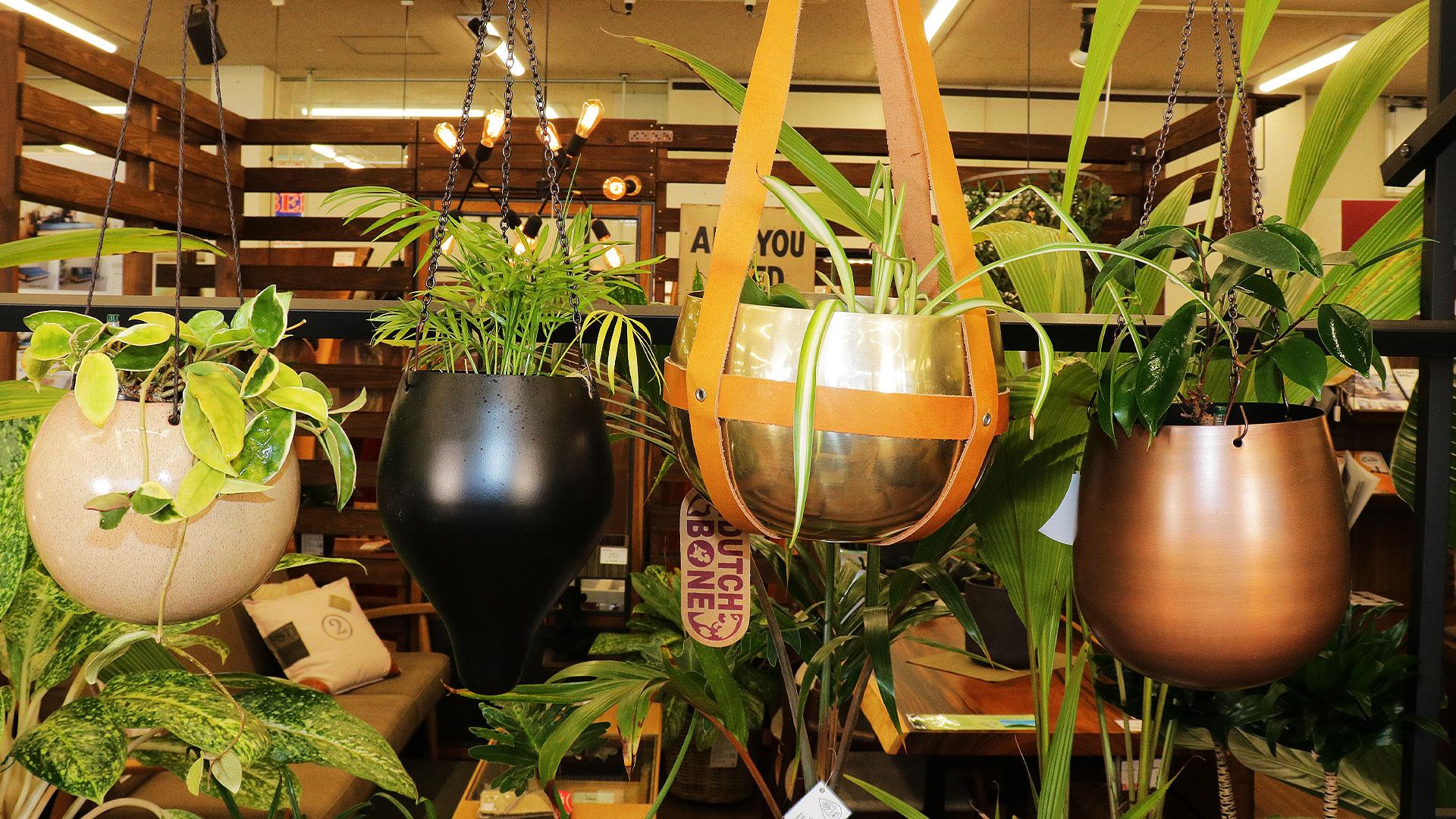 ハイドロカルチャーの吊り下げ用の鉢の色々な種類の画像
