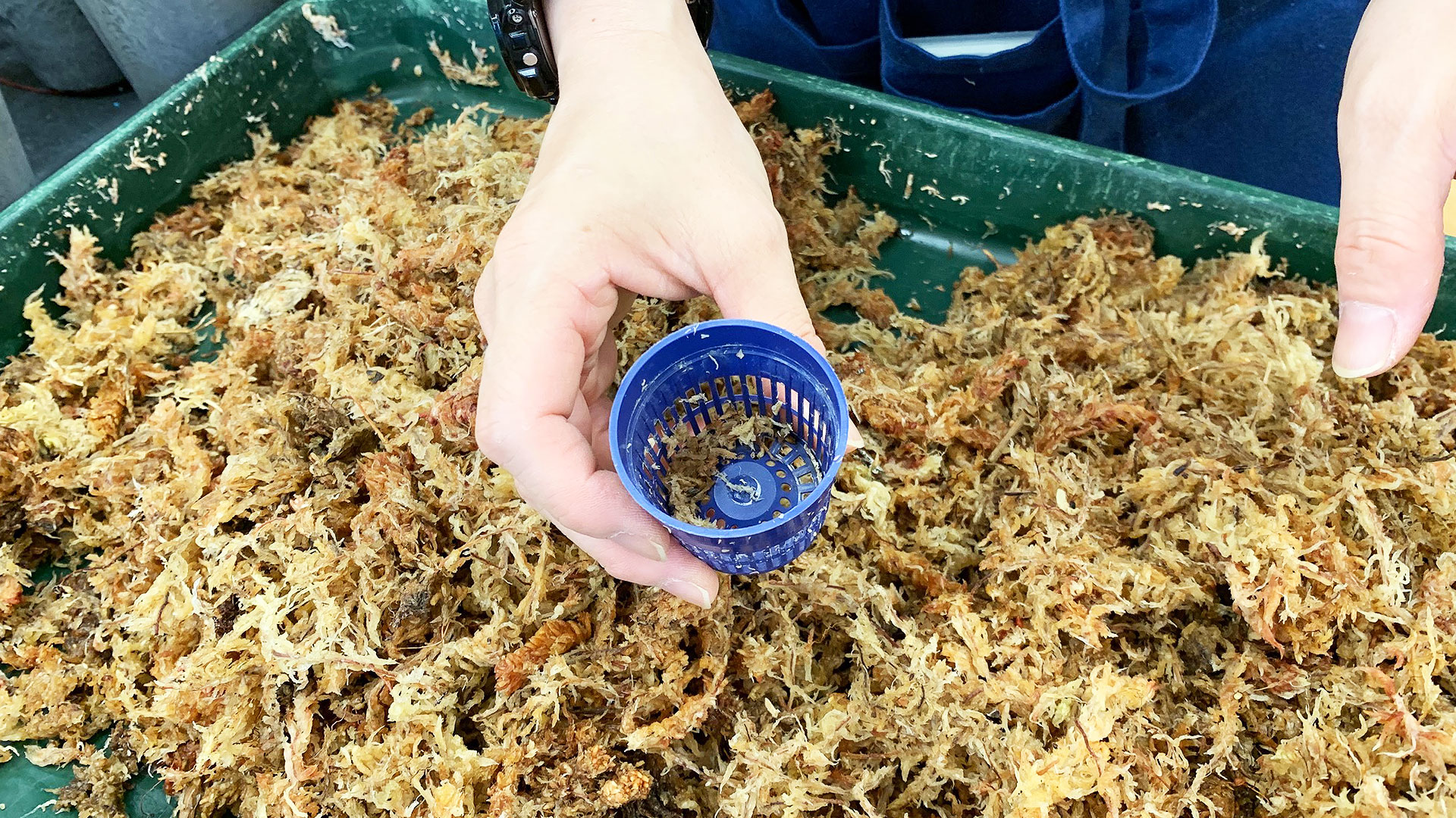 苔玉作りの始め方。まずカップを用意します。