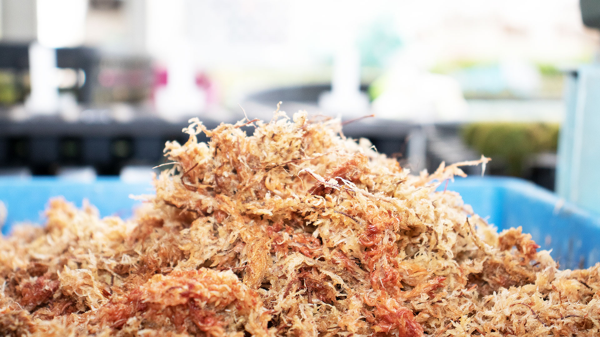 苔玉作りの基本ベースになる水苔の画像