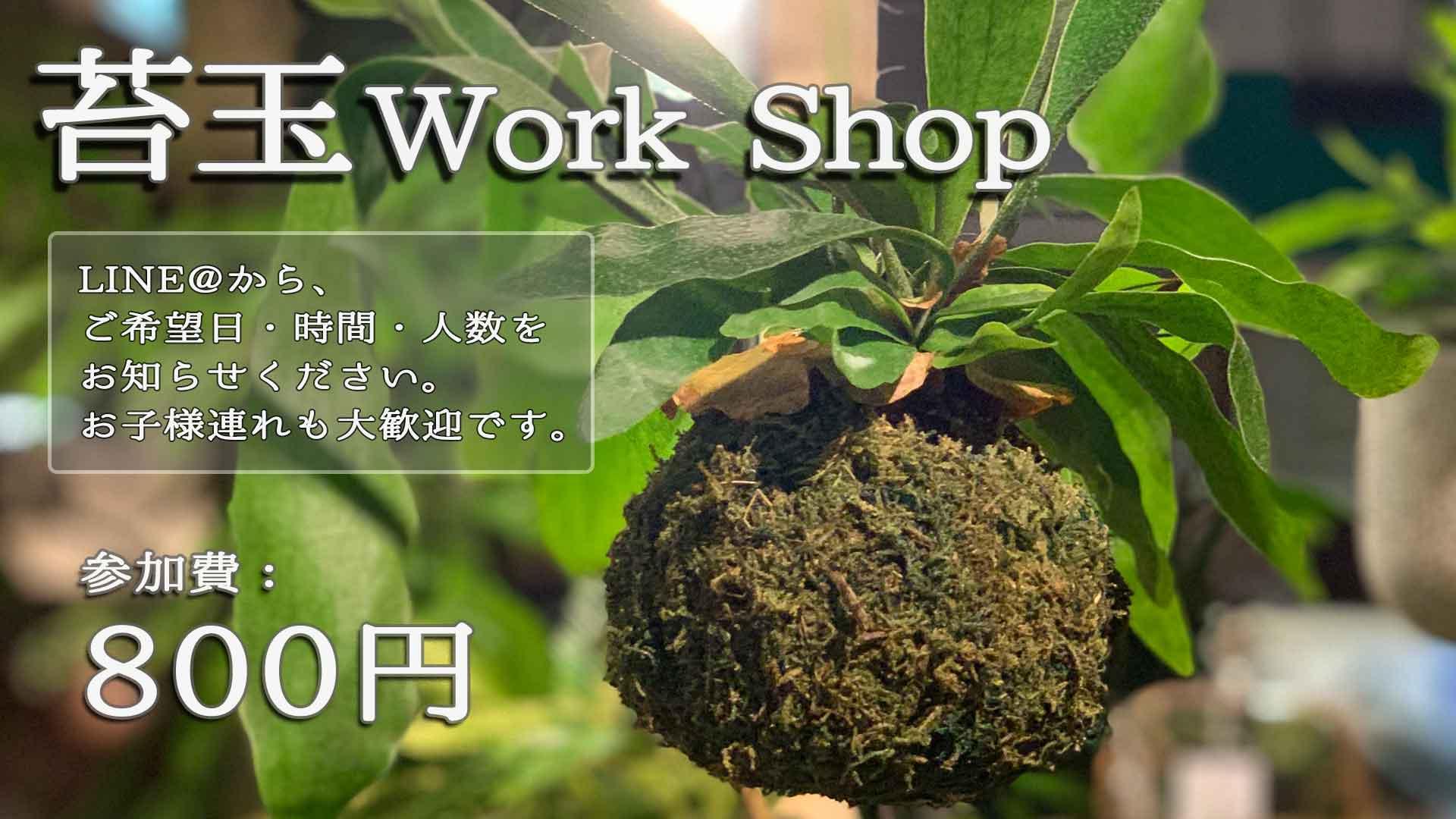苔玉作りのWork Shop