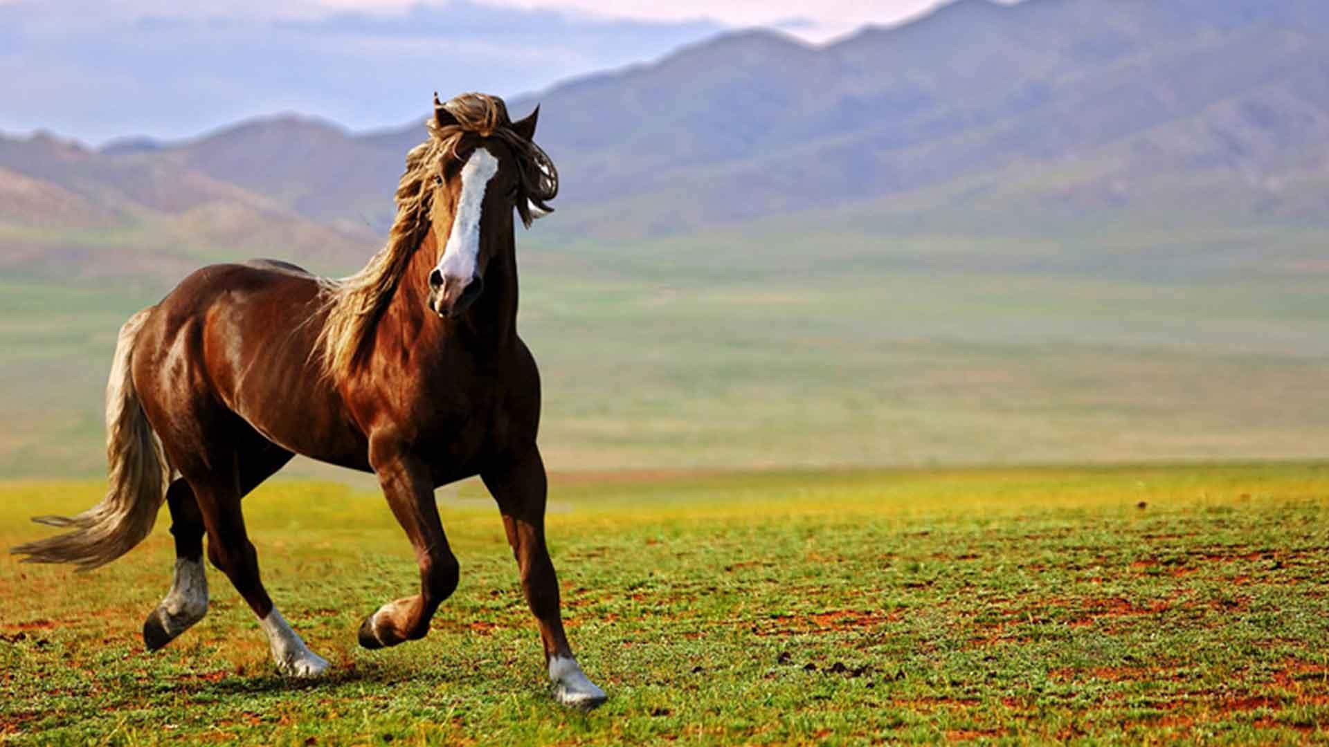 ノンコイルマットレスの中身の素材の馬の毛の画像
