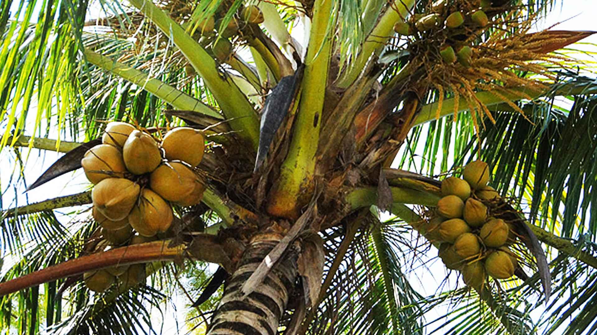 ノンコイルマットレスのカバー素材ココナッツの画像