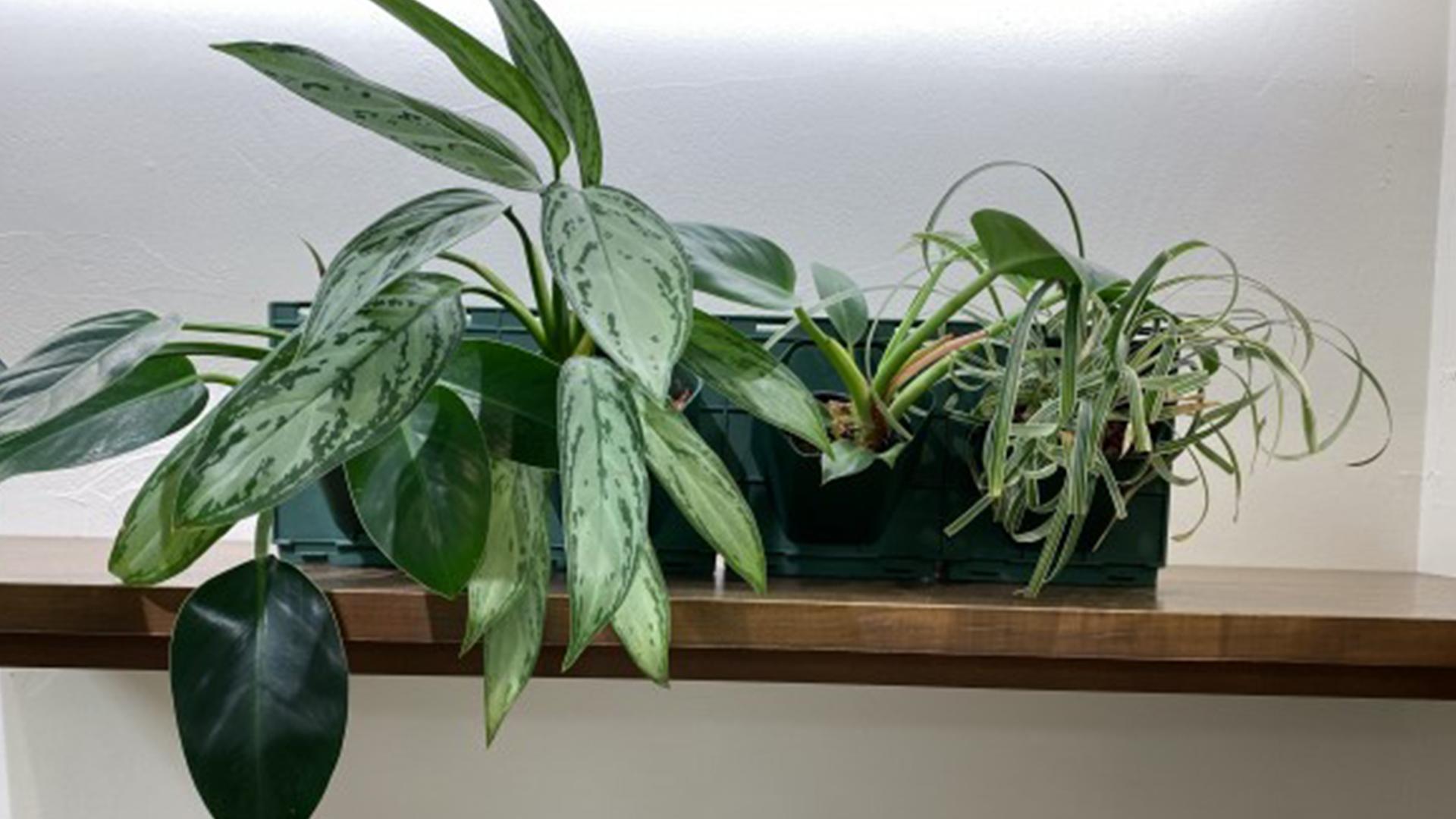 壁として使える観葉植物とプランターの画像