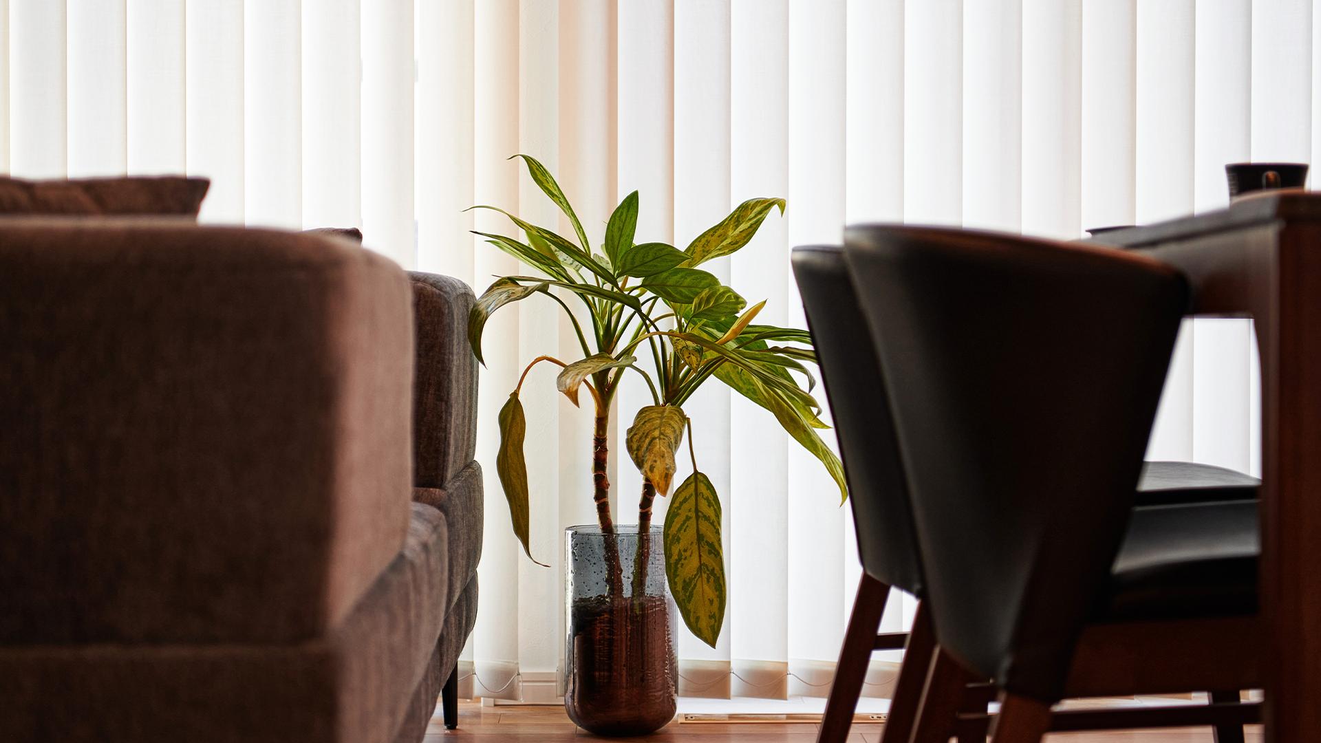外の日差しに照らされた観葉植物の画像